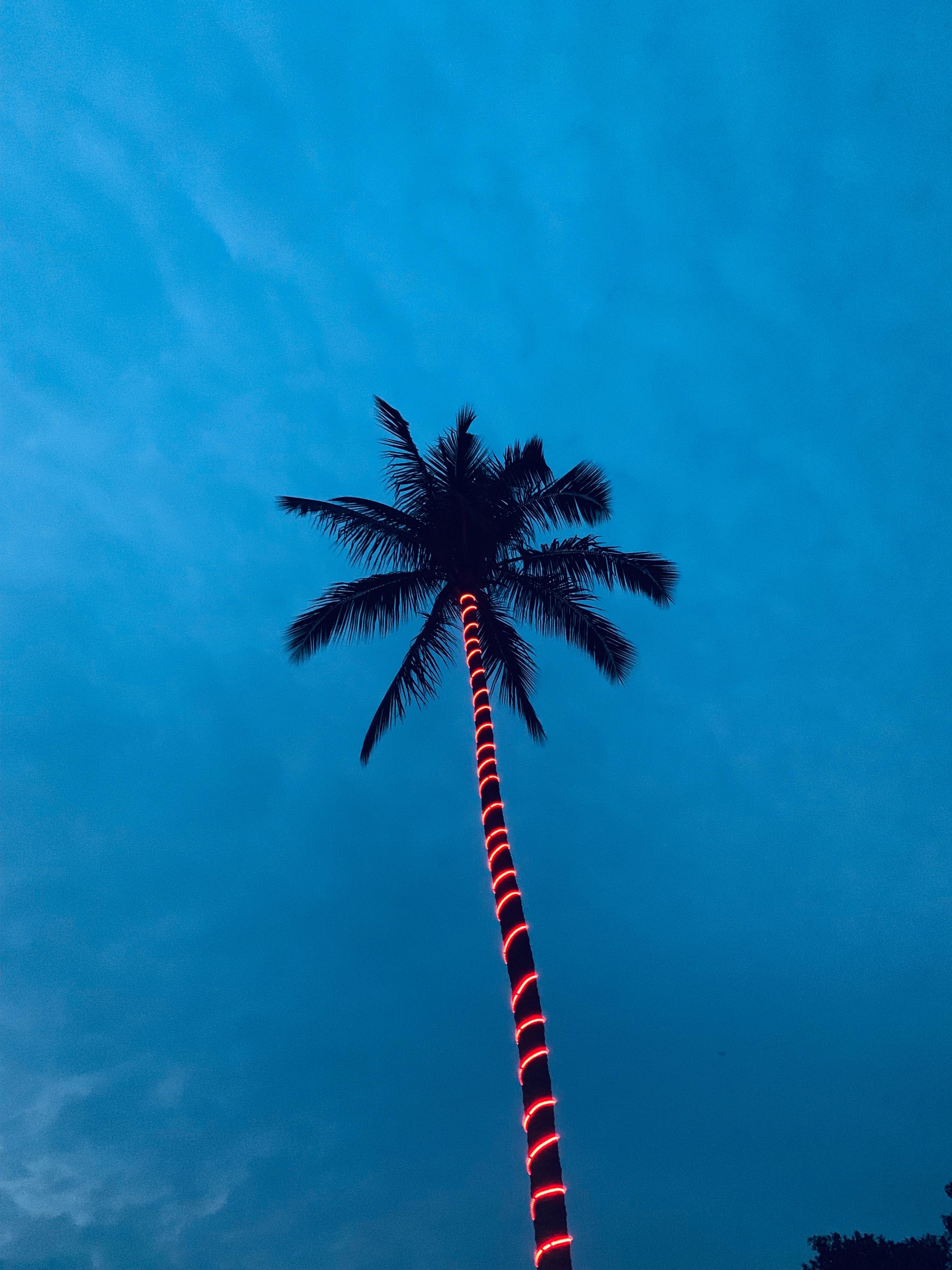 Grote boom verlichten palmboom